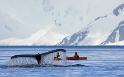 2022 Antarctica & Buenos Aires:  Photography on Ice